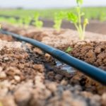 Micro Irrigation in Protected Cultivation