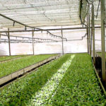 Protected Cultivation – The Future of Indian Agriculture
